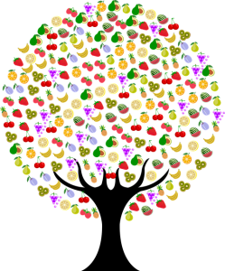 Avokadon Viljely