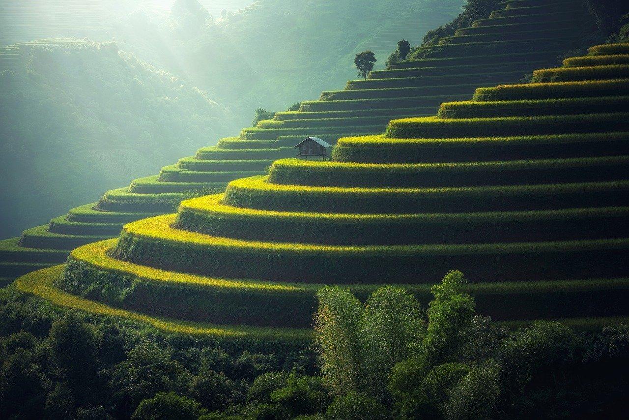 riisi terveysvaikutukset
