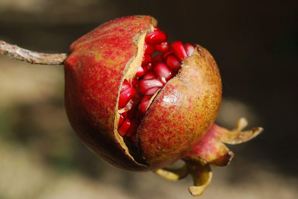 granaattiomena terveellisyys